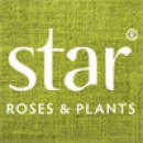 Star-Rose-and-Plants